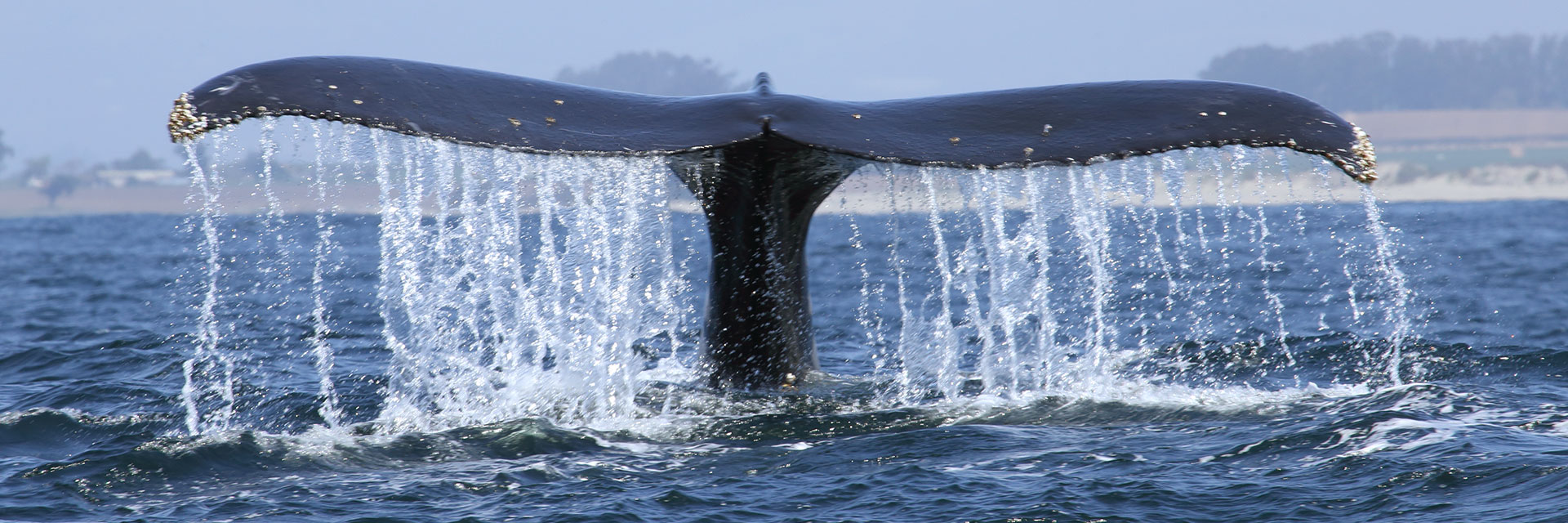 Whale Watching Package in Monterey Hotel